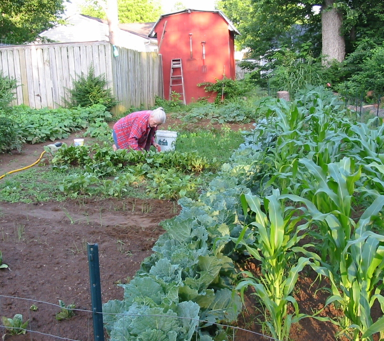 The suburban farmer vegetable gardens in town steve 39 s for Laying out your vegetable garden