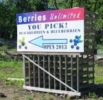 2013-06-11 blueberries 004